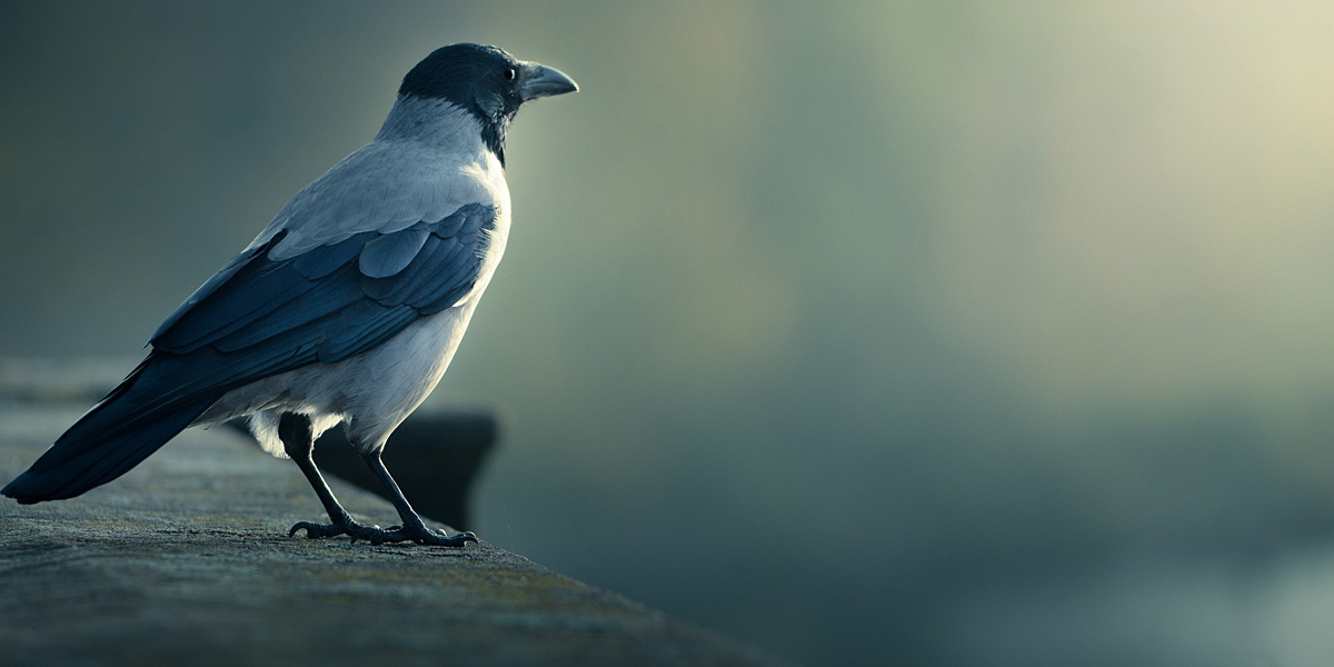Birds l 001 300+ Muhteşem HD Twitter Kapak Fotoğrafları