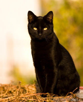 Origin Of Being A Black Cat Horror And Magical Symbols Welcome