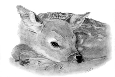 Fawn, Deer, WIld, Animal, Graphite Pencil, Drawing, Art, Fine Art