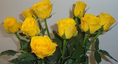 8 Rosas amarelas!!!