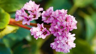 jardin et fleur