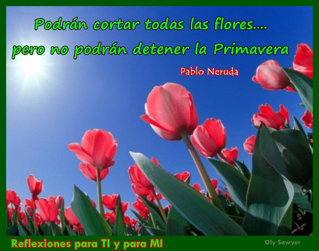Imagenes De Todas Las Flores Con Sus Nombres - Galería Fotos de Flores en Guatemala Solo lo mejor de