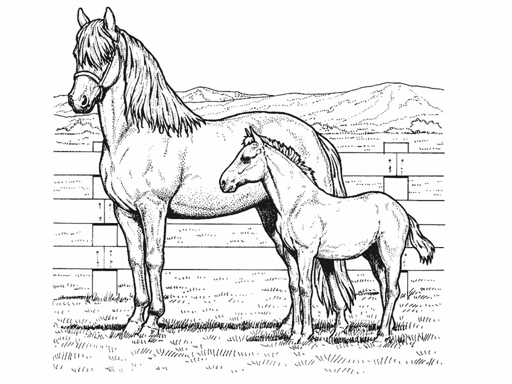 Horse coloring pages for kids coloring pages for kids - Coloriage chevaux ...