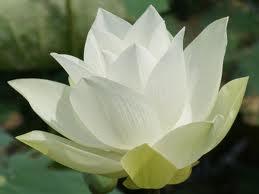 jardin et fleur;