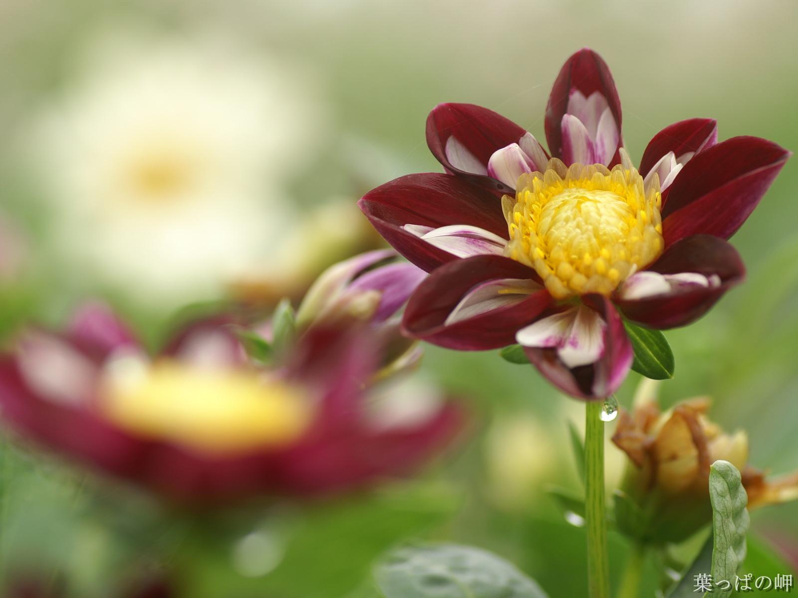 http://3.bp.blogspot.com/-HBjBkpdtUIU/Ti5ytGaiaoI/AAAAAAAAAXk/Rt-Q2BDH1jM/s1600/beautiful%2Bflowers%2Bhi%2Bres%2B%252815%2529.jpg