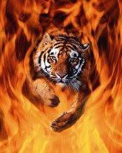 Vatreni tigar slike besplatne pozadine za mobitele