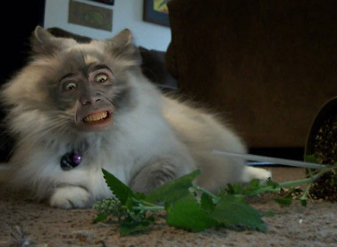 Nicolas Cage Superimposed on Felines |The Odd Blogg