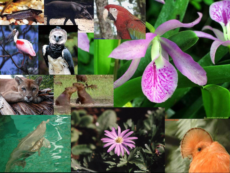 Flora y Fauna Colombiana
