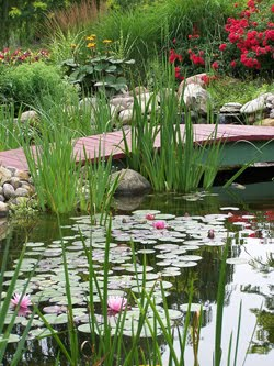 Ponds Big and Small to Inspire You