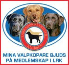 Labradorklubben