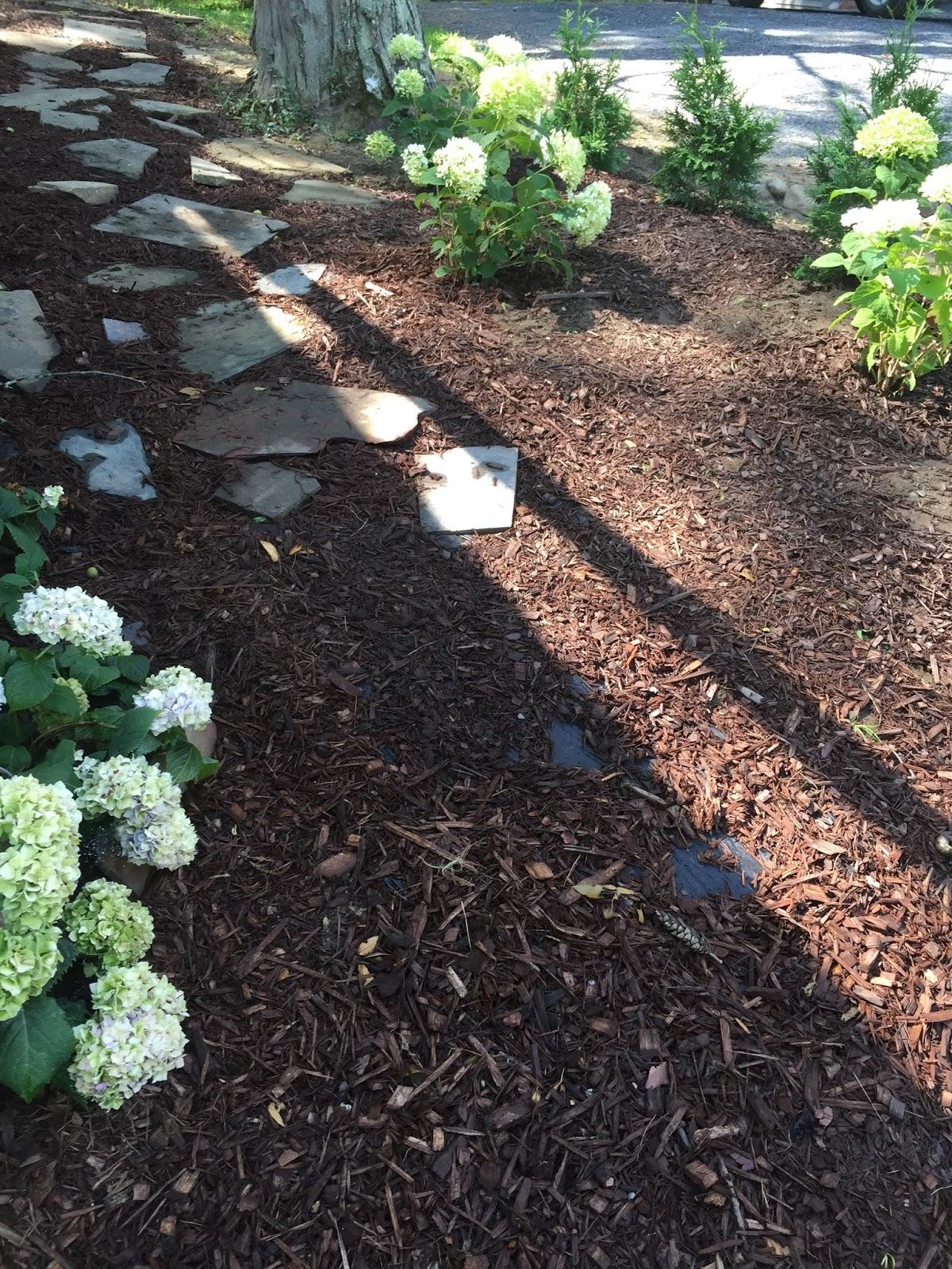 Green garden guru garden design 101 for Garden design 101