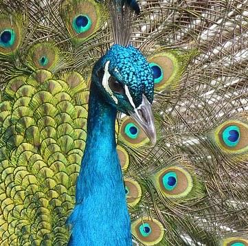 Q23 家の中に居る鳥