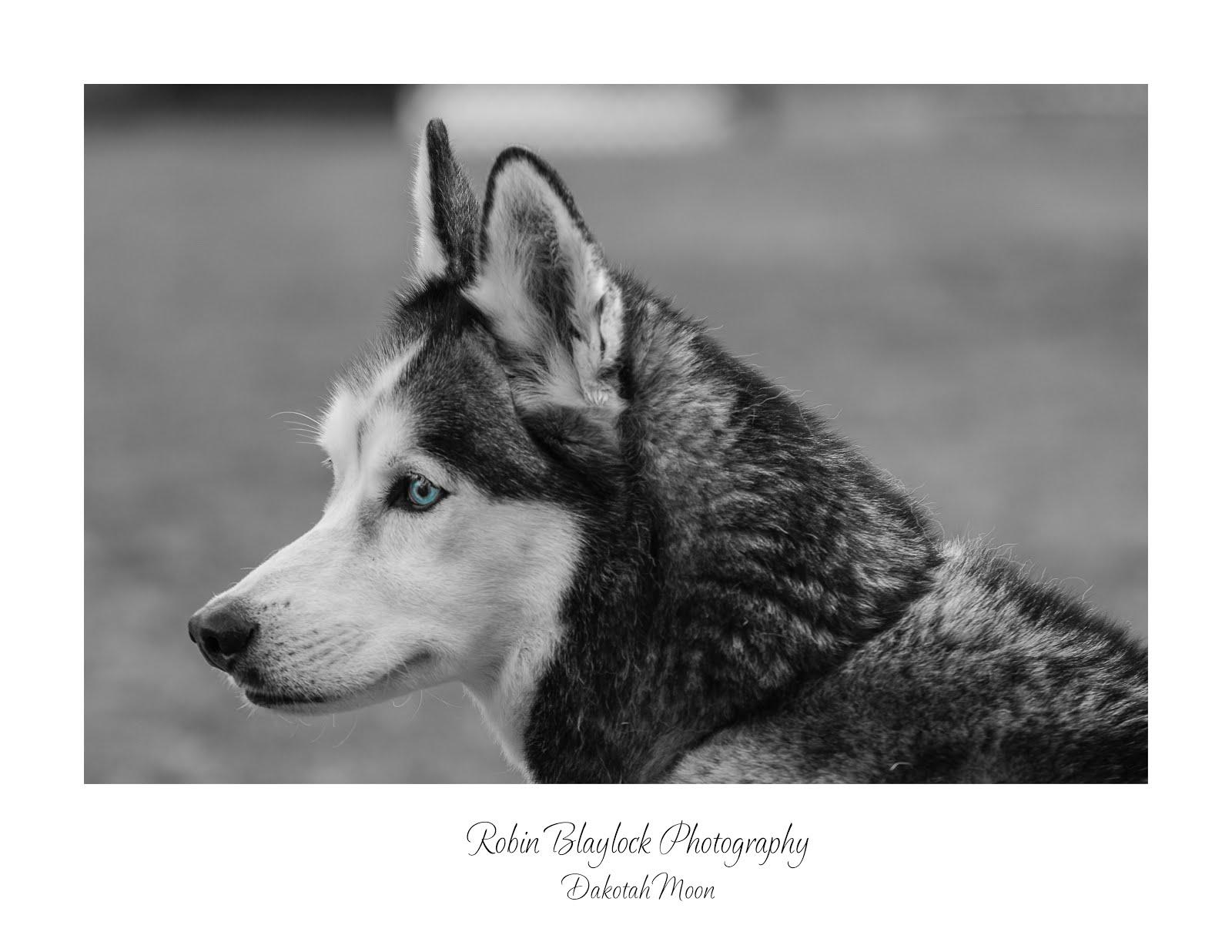 In Loving Memory of Dakotah Moon