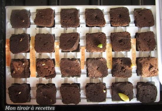 semis potagers