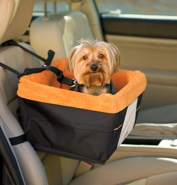 Must Have Travel Gadgets For Dogs (15) 10