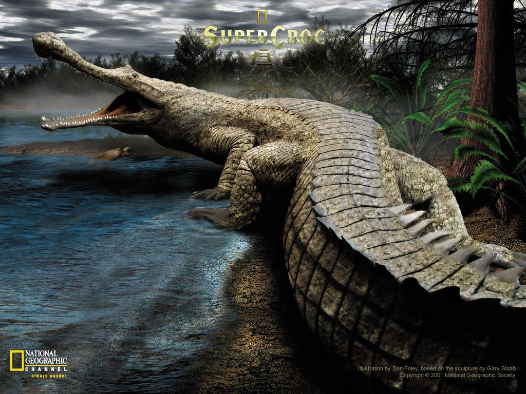 http://3.bp.blogspot.com/-HDVqTQVcd2I/TjC-8kgCgwI/AAAAAAAAAC4/_4A0ouNOyEI/s1600/3D+Nature+Wallpaper.jpg