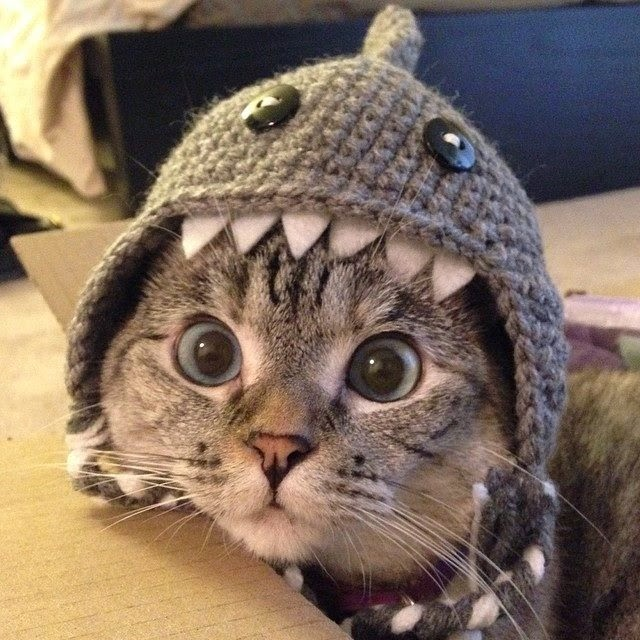 Funny cats - part 99 (40 pics + 10 gifs), cat pictures, cat wears shark wool hat