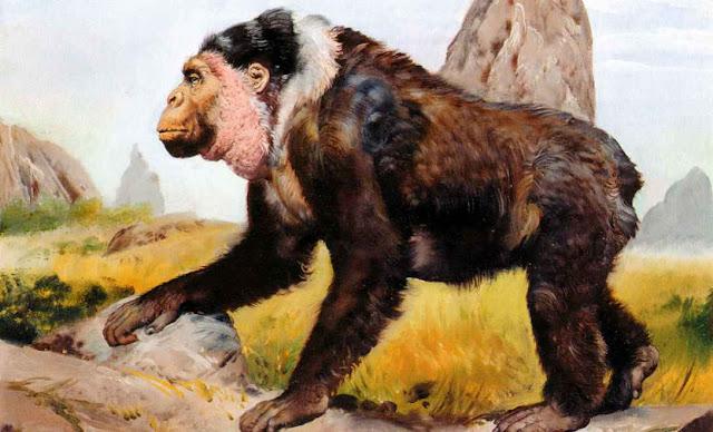 El gigantopithecus, simio mas grande