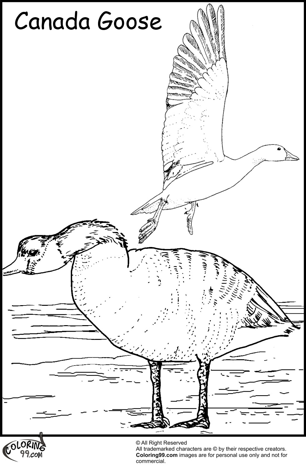 Canadian Goose Coloring Pages