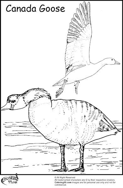 Canada Goose Coloring Page