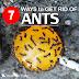 Kova su skruzdėlėmis