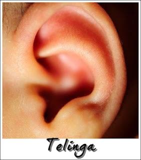 Deria pendengaran menggunakan organ telinga