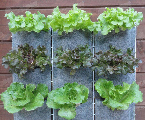 Proyecto de huerta continuamos investigando posibles for Materas para jardines verticales