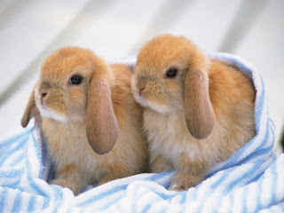 Download Buku Mewarnai Gambar 10 Anak Binatang