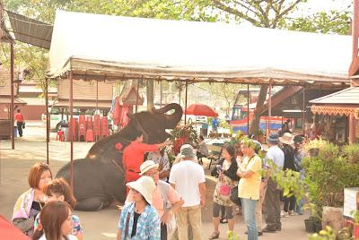Elephant tricks at Ayutthaya