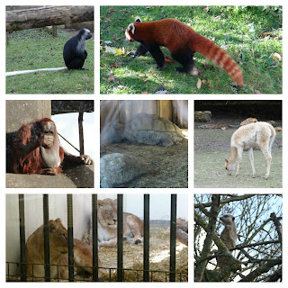 Blackpool Zoo, British family attraction, best British Day Out