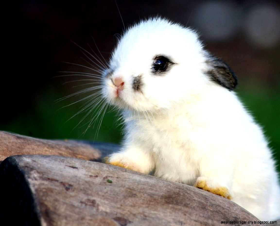 White Baby Bunnies For...