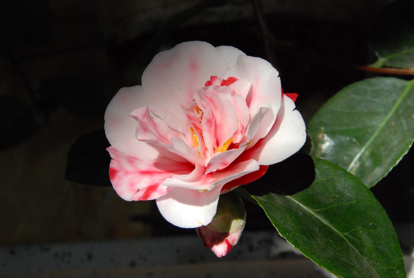 Den passionerade trädgårdsturisten: floristen tage andersens ...