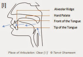 Place of Articulation: Clear l