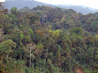 http://es.wikipedia.org/wiki/Siete_maravillas_naturales_del_mundo