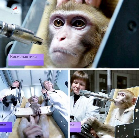 4 Ekor monyet bijak dihantar ke Marikh oleh Russia