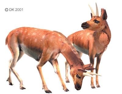 mamiferos prehistoricos Cranioceras