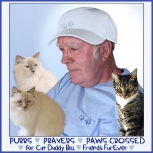 Purrs and Prayers
