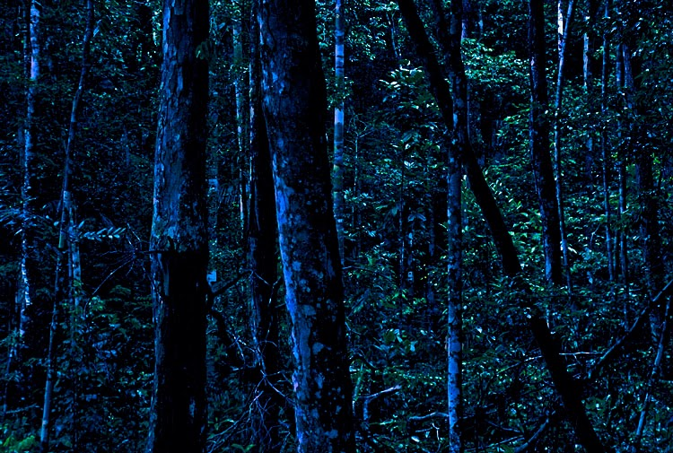 Coming Of Age In The Night Forest