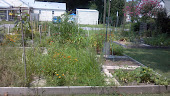 The Community Garden