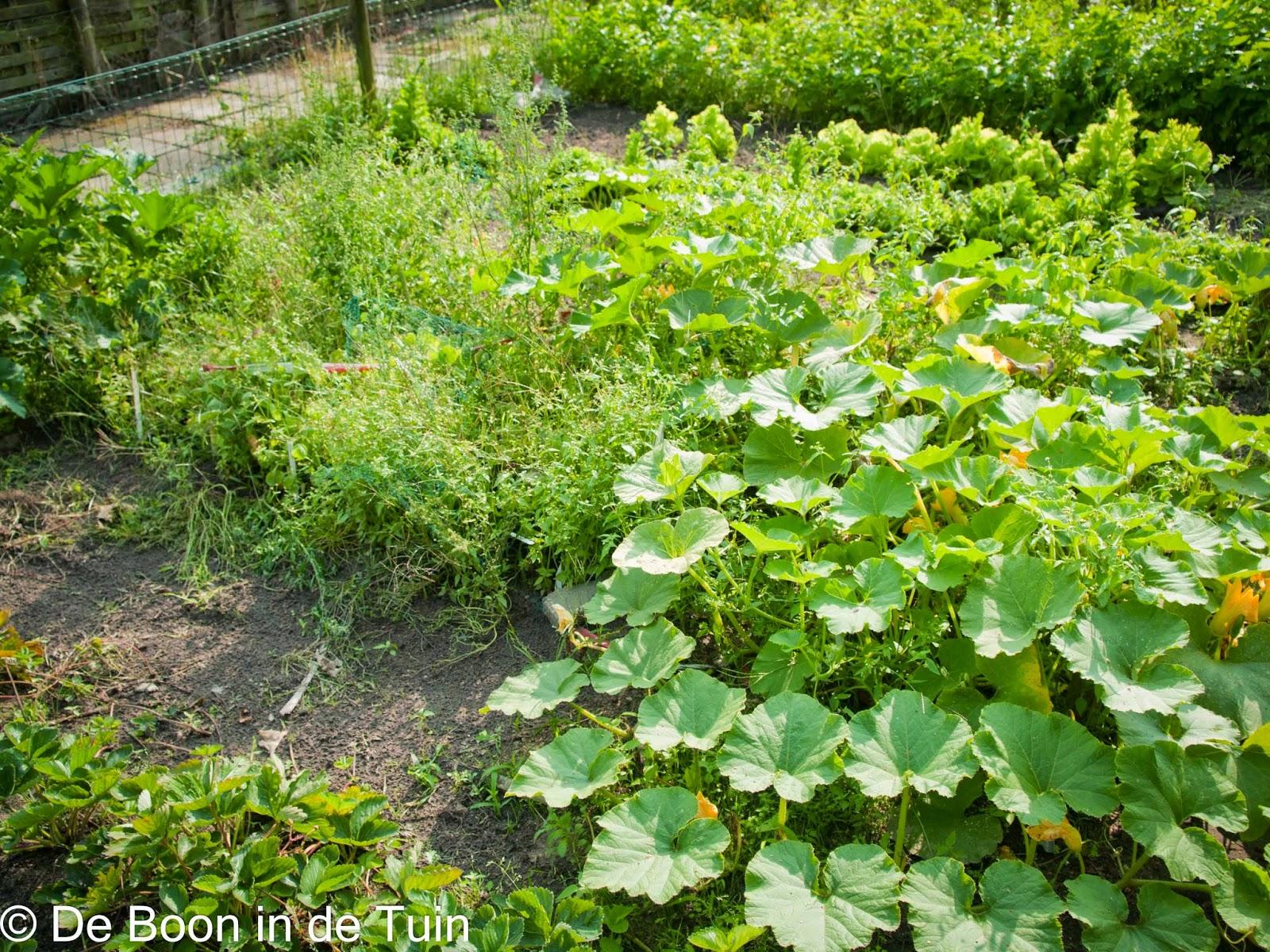 moestuin overzicht boerenkool spruiten andijvie courgettes