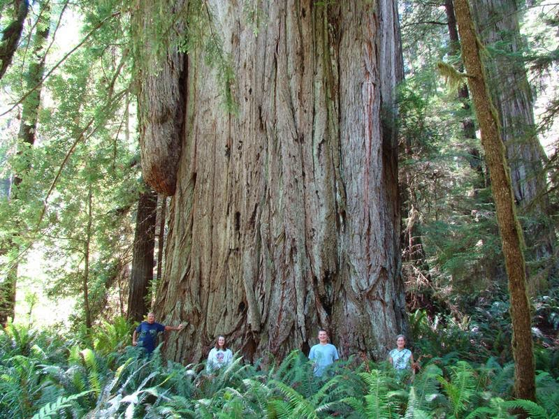 This is a family at the Grove of the Titans in Jedediah Smith State Park. This grove has the largest biomass on the planet and most of it is composed of the large redwood trees.