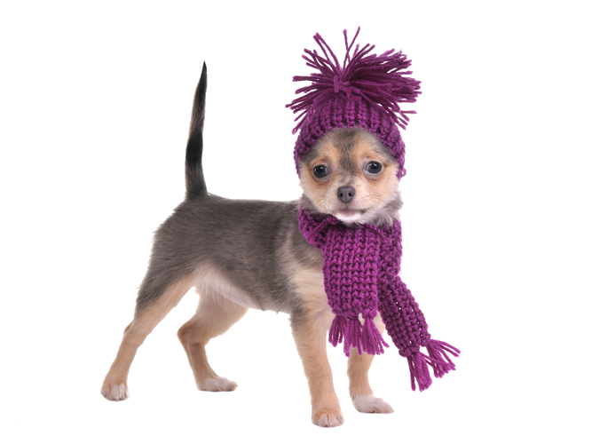 Tejiendo con Estilo: Coordinado de bufanda y gorro tejidos para perro