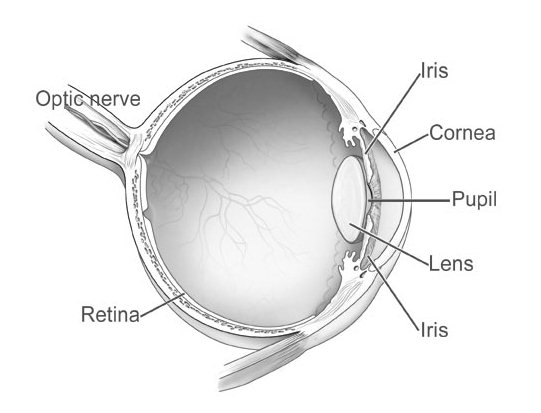 Human eye diagram and anatomy complete with images safe health tips human eye diagram ccuart Image collections