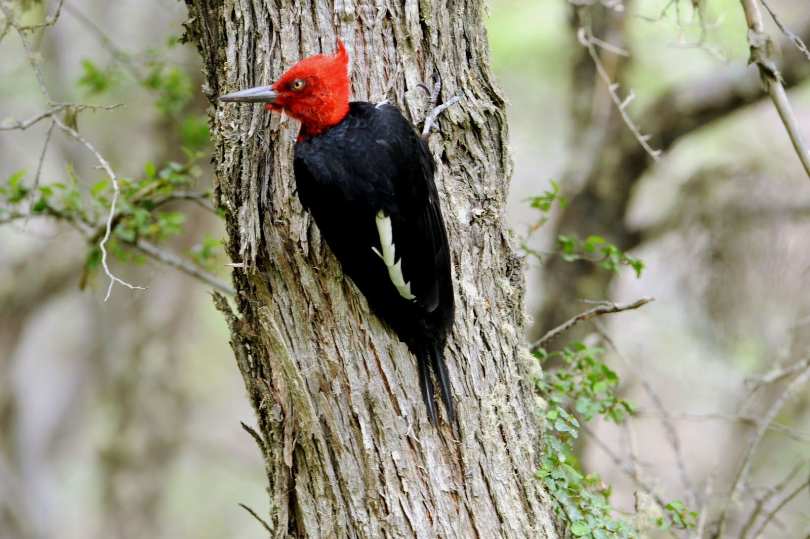 Woodpecker woodworking 3d