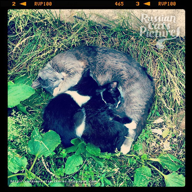 Instacats: Family Cat 03