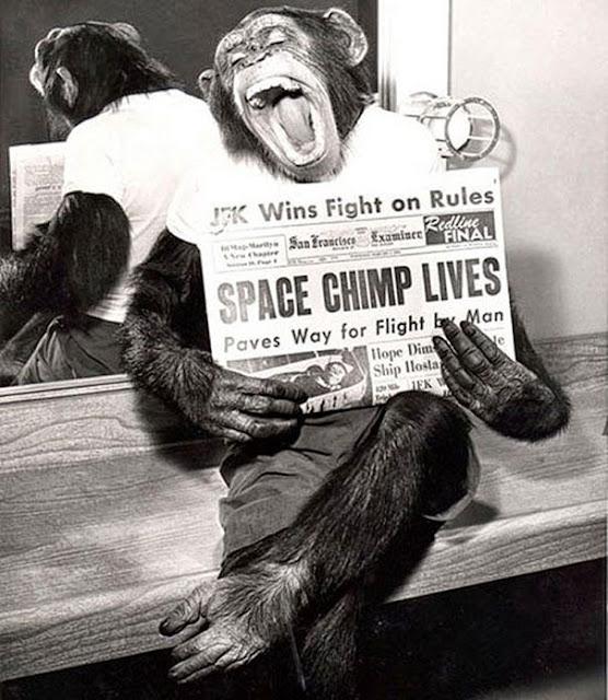 Шимпанзе космонавт, позирующая на камеры после успешной миссии полета в космос, 1961 г.
