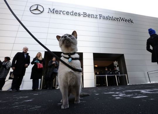 Fashion Week New York cat