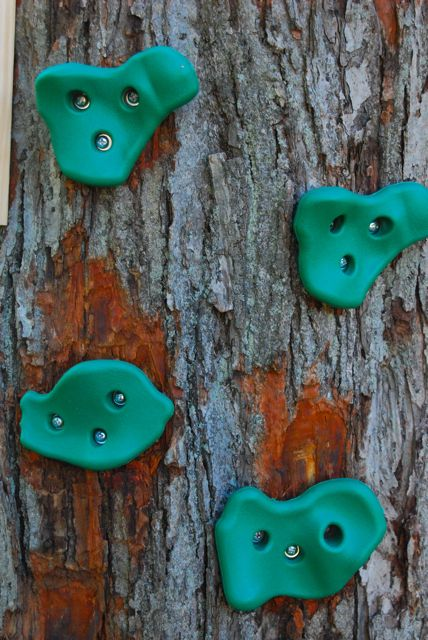 Climbing wall hold installed flat upon the tree trunk by chipping away some of the bark.
