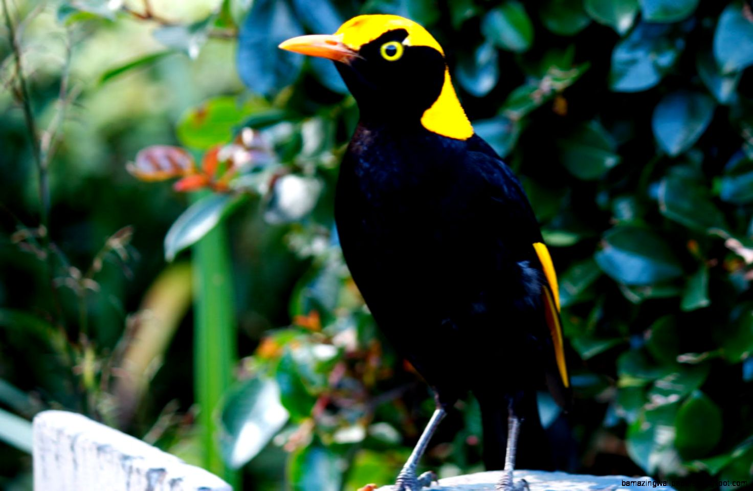 Tropical Rainforest Animals 22 Background
