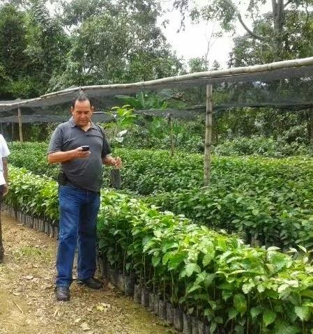 Gobierno de huixtla invierte en cefeticultura gip del for Viveros del sureste